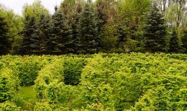 Der Irrgarten von Unterweikertshofen – ein besonderes Labyrinth in Deutschland